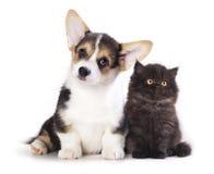 Chiot et chaton Images libres de droits