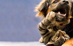 Chiot et chaton Photo libre de droits
