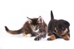 Chiot et chaton Photos libres de droits