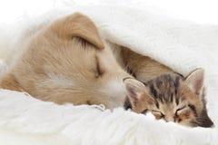 Chiot et chaton Photographie stock