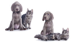 Chiot et chaton Image stock