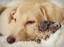 Chiot et chaton Images stock