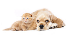 Chiot et chaton Photographie stock