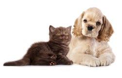 Chiot et chaton Image libre de droits