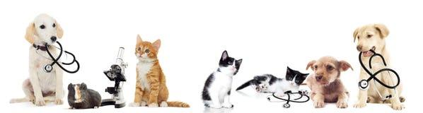 Chiot et chaton Photo stock