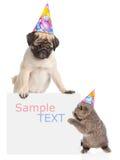 Chiot et chaton dans des chapeaux d'anniversaire jetant un coup d'oeil par derrière le conseil vide L'espace pour le texte D'isol Image libre de droits