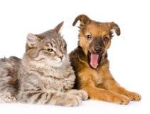 Chiot et chaton de baîllement ensemble D'isolement sur le fond blanc Images libres de droits