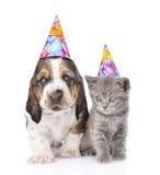 Chiot et chaton de chien de basset avec des chapeaux d'anniversaire D'isolement sur le blanc Image stock