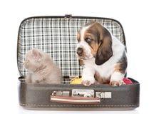 Chiot et chaton de chien de basset se reposant dans un sac D'isolement sur le blanc Photographie stock libre de droits