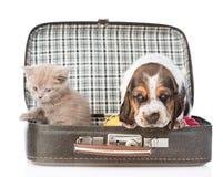 Chiot et chaton de chien de basset se reposant dans un sac D'isolement sur le blanc Photo stock