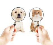 Chiot et chaton de Labrador Photos libres de droits