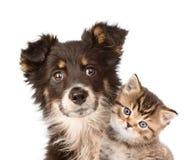 Chiot et chaton de plan rapproché ensemble D'isolement sur le blanc Images libres de droits