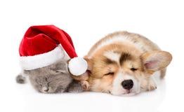 Chiot et chaton de sommeil Pembroke Welsh Corgi avec le chapeau de Santa D'isolement Photographie stock