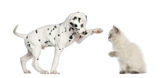 Chiot et chaton hauts-fiving Photos libres de droits