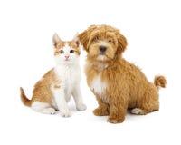 Chiot et chaton oranges et blancs Photographie stock libre de droits