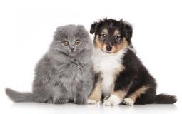 Chiot et chaton sur le fond blanc Photos stock