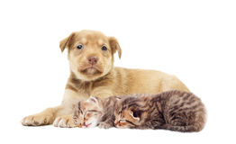 Chiot et chatons Photo stock
