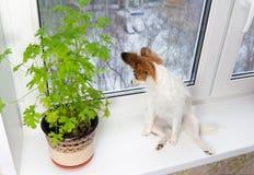 Chiot et fleur sur l'hublot Photo stock