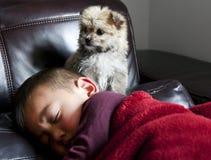 Chiot et garçon attentifs Photo stock