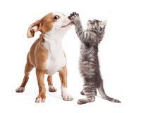Chiot et Kitten Playing drôles photographie stock libre de droits