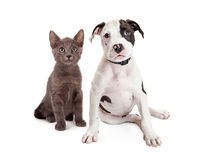 Chiot et Kitten Sitting Together mignons Photographie stock