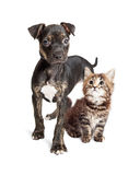 Chiot et Kitten Together Over White Background Image libre de droits
