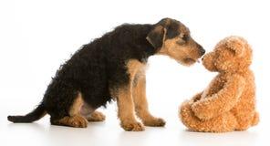 Chiot et ours de nounours mignons Images libres de droits