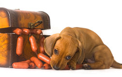 Chiot et saucisses Image stock