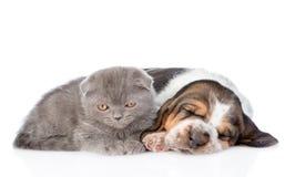 Chiot gris de chien de chaton et de basset de sommeil se trouvant ensemble D'isolement Images libres de droits