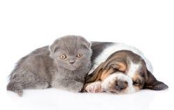 Chiot gris de chien de chaton et de basset de sommeil se trouvant ensemble D'isolement Photographie stock