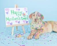 Chiot heureux du jour de mère Photo libre de droits