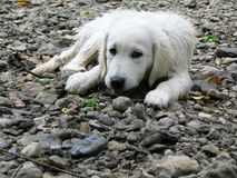 Chiot humide sur le lit de roche Image libre de droits