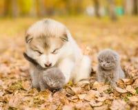 chiot jouant avec des chatons en parc d'automne Photos libres de droits