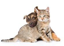 Chiot jouant avec le chat tigré D'isolement sur le fond blanc Images stock