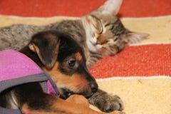 Chiot métis dans le seau avec le chat photo libre de droits