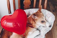 Chiot mignon avec le coeur rouge Concept heureux de jour du ` s de Valentine WI de chien Photo libre de droits