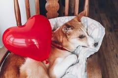 Chiot mignon avec le coeur rouge Concept heureux de jour du ` s de Valentine WI de chien Photographie stock