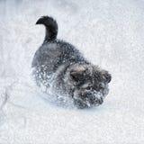 Chiot mignon dans la neige photo stock