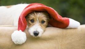 Chiot mignon de chien de cadeau de Noël heureux photos libres de droits