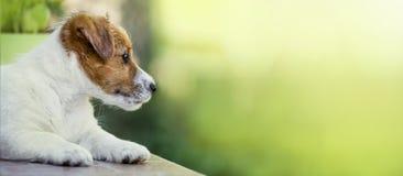 Chiot mignon de chien pensant - idée de bannière de Web photos libres de droits