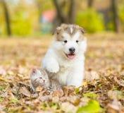 Chiot mignon et petit chaton se reposant ensemble en parc d'automne Photo stock