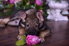 Chiot mignon se trouvant sur le plancher avec des fleurs Photos stock