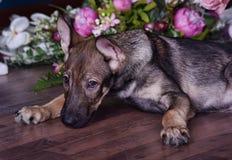 Chiot mignon se trouvant sur le plancher avec des fleurs Photo stock