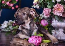 Chiot mignon se trouvant sur le plancher avec des fleurs Photo libre de droits