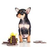 Chiot noir minuscule avec des morceaux de chocolat Images libres de droits