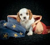 Chiot patriotique Photographie stock libre de droits