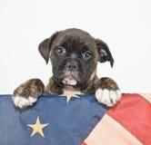 Chiot patriotique Photo libre de droits
