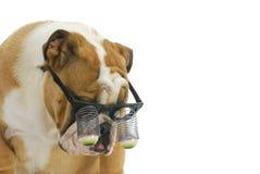Chiot portant les lunettes drôles Photographie stock libre de droits