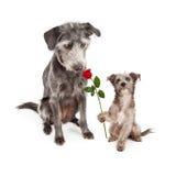 Chiot remettant la fleur au chien de mère Images stock