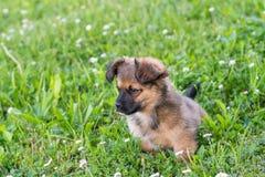 Chiot se reposant sur l'herbe Photo stock
